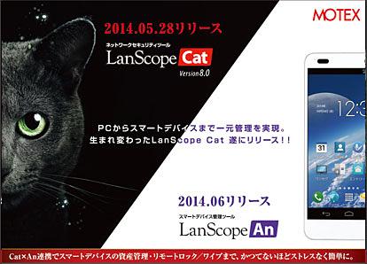 BCN_cat8_31.jpg